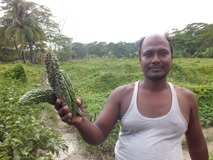 Photo: Aktar Hossain, a local farmer who adapted the new technique in Aminabad in Char Fasson, shows good harvest of vegetable from his crop field. Credit: Naimul Haq.