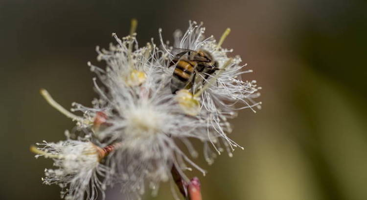 Photo: Photo: Many associated biodiversity species, such as bees, are under severe threat. Credit: FAO/Zinyange Auntony