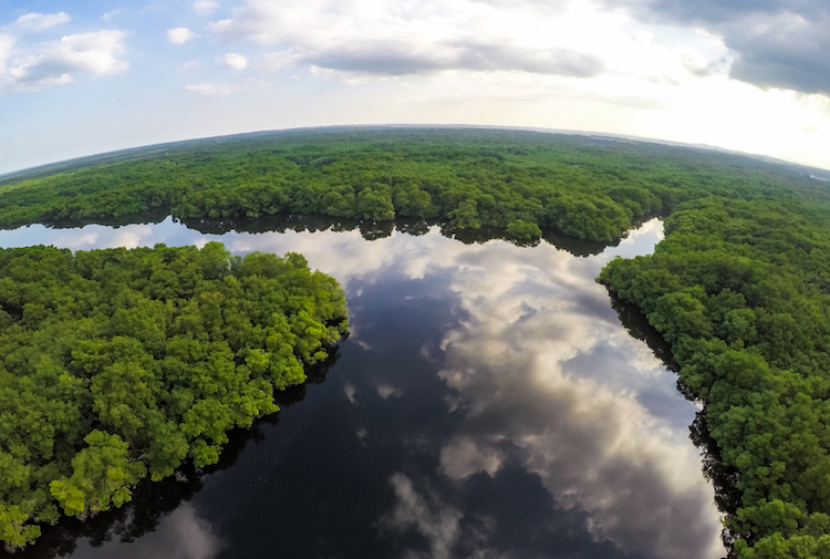 Image: Amazon forest landscape. Credit: Ecuador Government